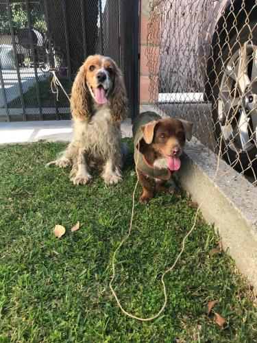 Found/Stray Male Dog last seen Tenaya Ave, South Gate, CA 90280