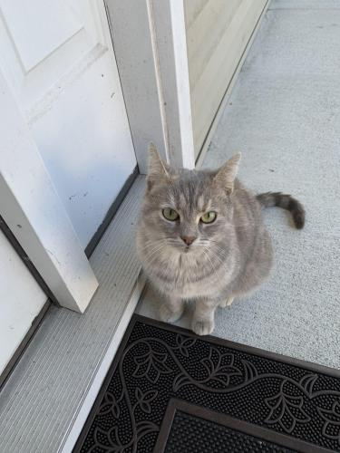 Found/Stray Female Cat last seen Cheyenne Dr, Newport News, VA 23608