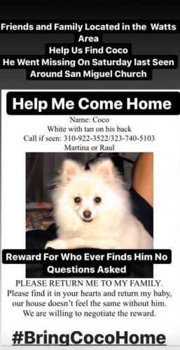 Lost Male Dog last seen Kalmia St. , Los Angeles, CA 90002