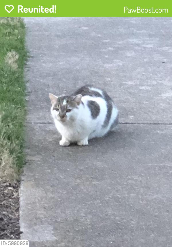 Reunited Unknown Cat last seen Parallel to Northampton , Virginia Beach, VA 23455
