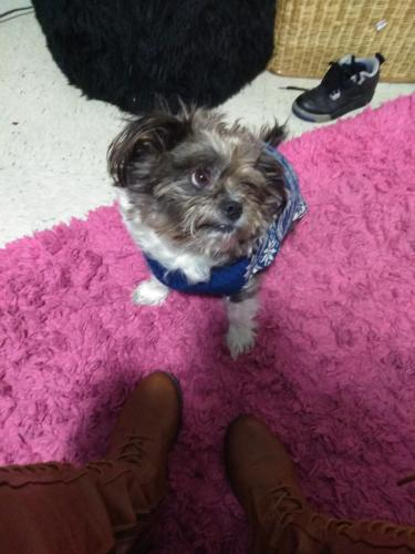 Lost Male Dog last seen Portsmouth, Portsmouth, VA 23704