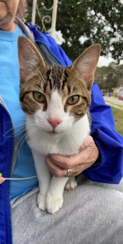 Found/Stray Male Cat last seen Tidewater Drice, Norfolk, VA 23518