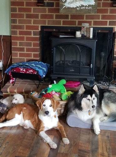 Lost Male Dog last seen Warrick Rd and Cedar Rd, Chesapeake, VA 23322