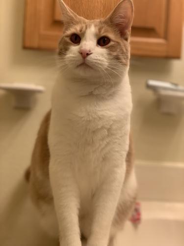 Lost Male Cat last seen Yorktown Naval Weapons Station, Newport News, VA 23603