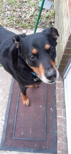 Found/Stray Male Dog last seen Greenwich Lane  Newport News VA, Newport News, VA 23608