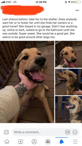 Found/Stray Female Dog last seen Nw 32nd st and n Virginia Ave , Oklahoma City, OK 73118