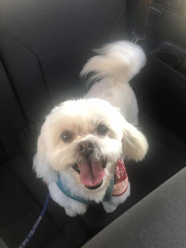 Lost Male Dog last seen Saticoy and Corbin , Los Angeles, CA 91306