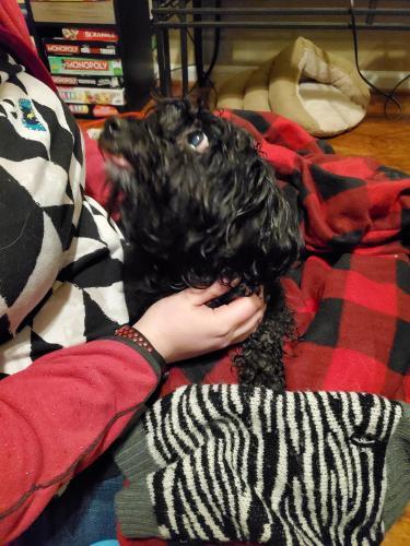 Found/Stray Male Dog last seen Redwing neighborhood by park, Virginia Beach, VA 23454