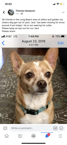 Lost Male Dog last seen Willow and golden , Long Beach, CA 90806