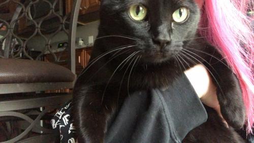 Lost Female Cat last seen salem rd, Virginia Beach, VA 23456