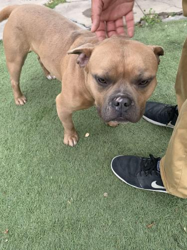 Found/Stray Male Dog last seen 54th and 5th Avenue, Los Angeles, CA 90043