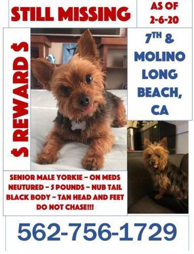 Lost Male Dog last seen Molina 7th st, Long Beach, CA 90802