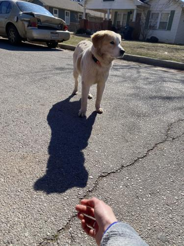 Found/Stray Unknown Dog last seen NW 33rd and McKinley Ave , Oklahoma City, OK 73118