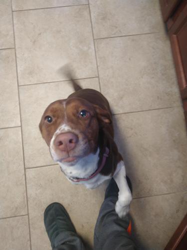 Lost Female Dog last seen Winterberry lane, Virginia Beach, VA 23453