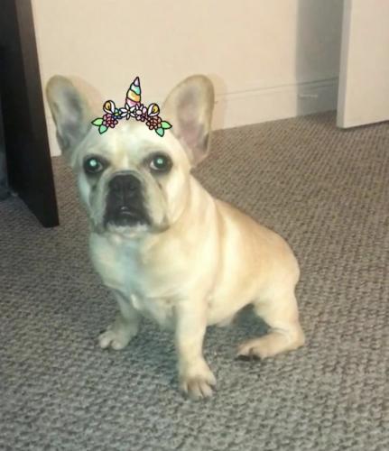 Lost Female Dog last seen Barbara GOLEMAN High school, Hialeah, FL 33018