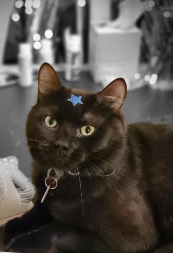 Lost Male Cat last seen Near Ben Morrell circle Norfolk Virginia , Norfolk, VA 23510