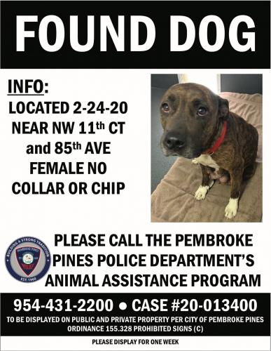 Found/Stray Female Dog last seen NW 11th Ct and 85th Ave., Pembroke Pines, FL., Pembroke Pines, FL 33024