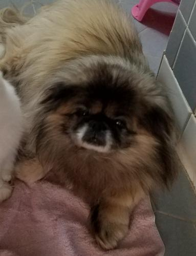 Lost Male Dog last seen Lake Shores and Tern Road, Virginia Beach, VA 23455