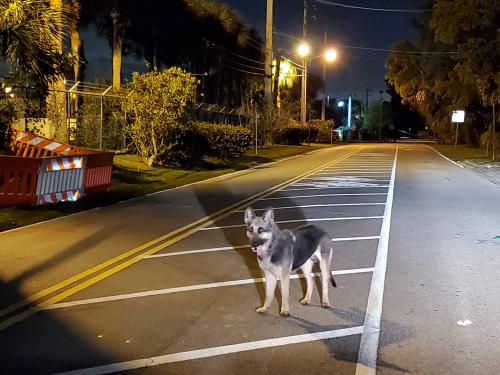 Found/Stray Unknown Dog last seen Near empty lot by Renaissance Charter School at Plantation and around Plantation wastewater plant , Plantation, FL 33313
