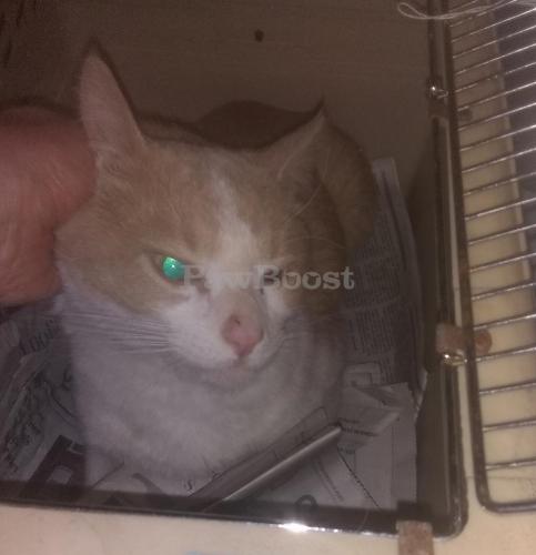 Found/Stray Male Cat last seen Windham Lane , Wheaton-Glenmont, MD 20902