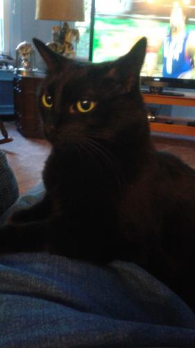 Lost Female Cat last seen Near waterwood way, Suffolk, VA 23434