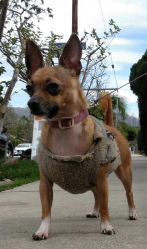 Lost Male Dog last seen North Wilton Place, Los Angeles, CA 90038