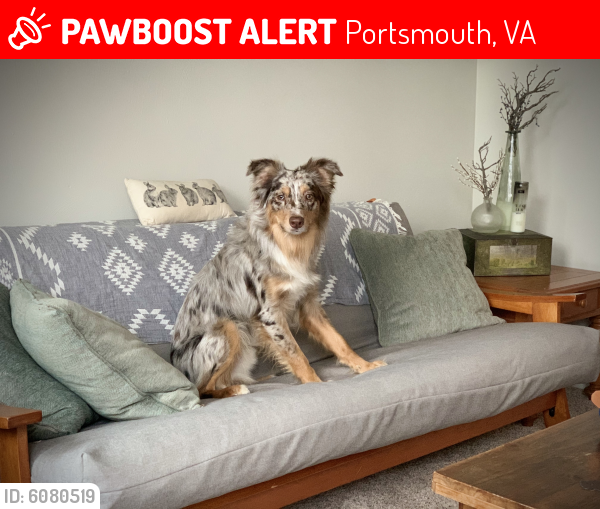 Lost Male Dog last seen London blvd, Portsmouth, VA 23704
