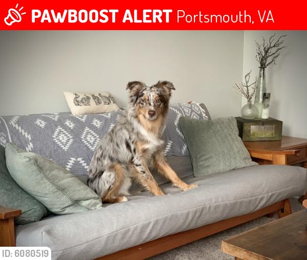 Lost Male Dog last seen London blvd, Portsmouth, VA 23704
