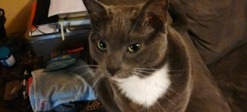 Lost Female Cat last seen Springdale Way and Benjamin Terrace, Hampton, VA 23666
