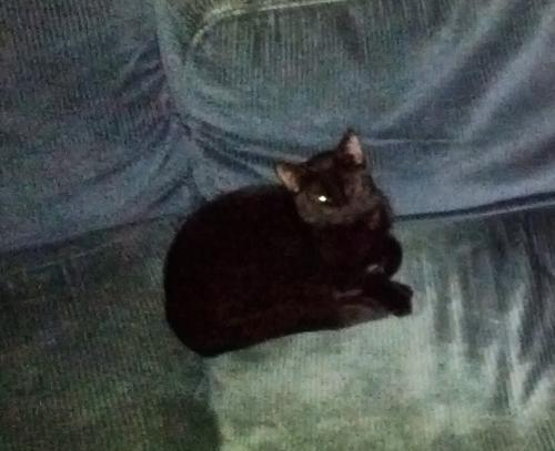 Lost Female Cat last seen Near Manchester Ave , Norfolk, VA 23508