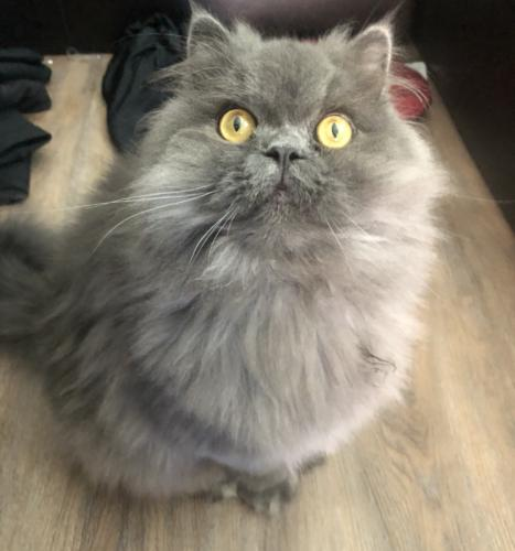 Lost Male Cat last seen Virginia Beach Blvd, Virginia Beach, VA 23462