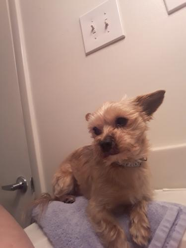 Lost Male Dog last seen Cambridge Apartments Goldsboro Dr, Hampton, VA 23605