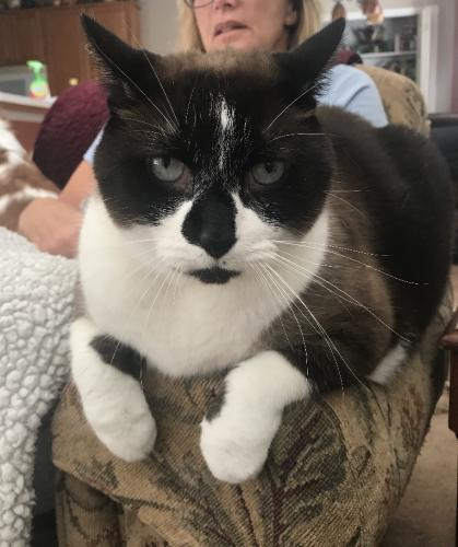 Lost Male Cat last seen Catalpa court , Suffolk, VA 23435