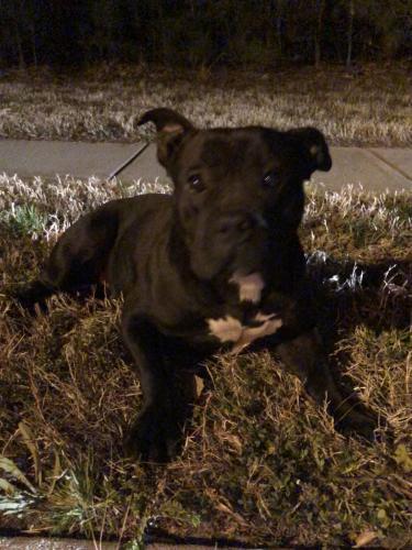 Found/Stray Female Dog last seen Spanish Moss Drive, Chesapeake VA, Chesapeake, VA 23320