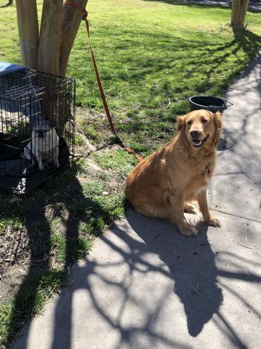 Found/Stray Female Dog last seen Murray Dr, Chesapeake, VA 23322