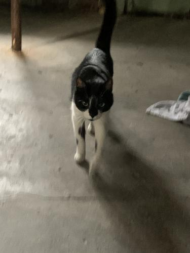Found/Stray Female Cat last seen Renrock and Cedar, Cleveland Heights, OH 44118