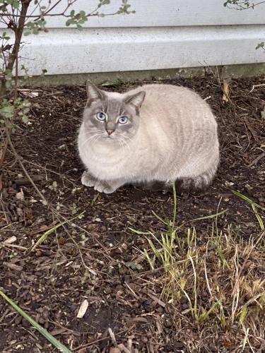 Lost Female Cat last seen Nantucket Place, Pilot House Drive, Newport News, VA 23606