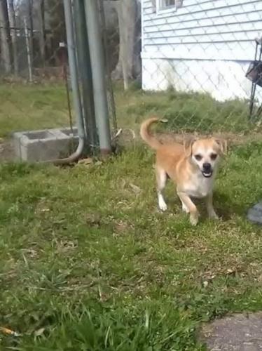 Found/Stray Male Dog last seen Near North Trellis Ct, Newport News, VA 23608