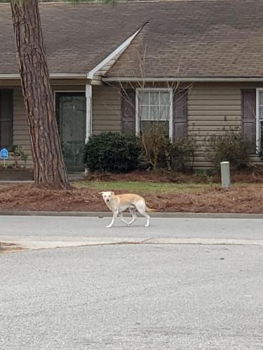 Found/Stray Male Dog last seen Pine needles circle, Portsmouth, VA 23703