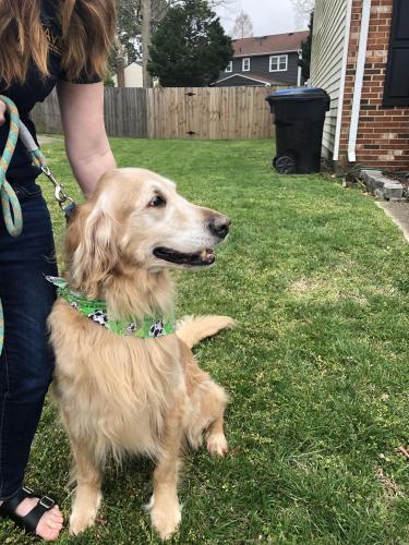 Found/Stray Male Dog last seen Pleasant Valley and Glanmire, Virginia Beach, VA 22464