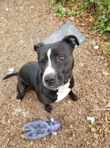 Found/Stray Male Dog last seen East Randall Ave at Norfolk Ave in Norfolk, VA , Norfolk, VA 23503