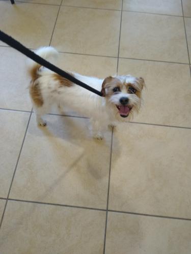 Found/Stray Female Dog last seen Near Woodfin Rd, Newport News, VA 23605