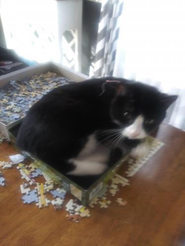 Lost Male Cat last seen Culver ave, Virginia Beach, VA 23454