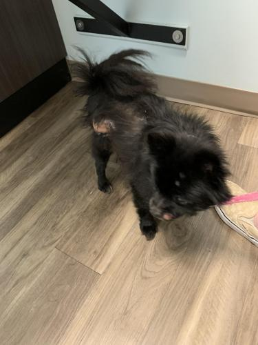 Lost Male Dog last seen Camino Real and Los Colonis Dr, Virginia Beach, VA 23456