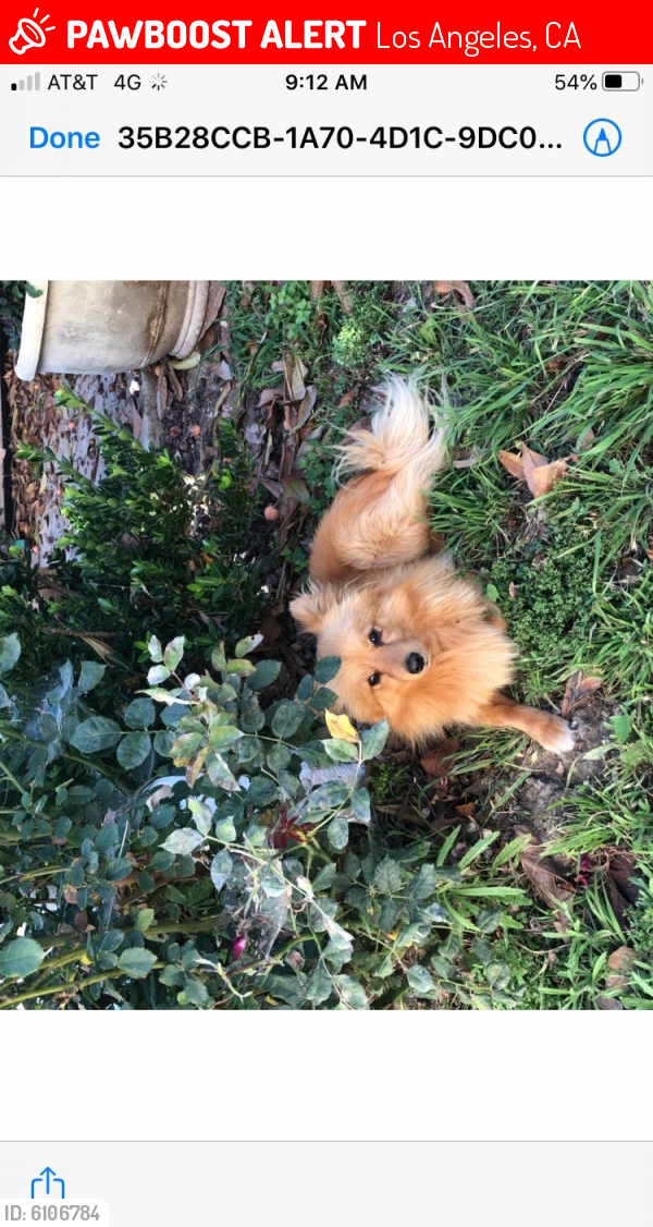 Lost Male Dog last seen herrick ave and excelsior st, sylmar ca. , Los Angeles, CA 91342