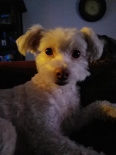 Lost Female Dog last seen Century and normandie, Los Angeles, CA 90044