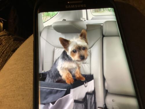 Lost Male Dog last seen Near Greenwood Dr, Portsmouth, VA 23702