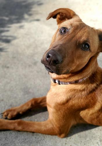 Lost Female Dog last seen Velva drive and windy rd, Chesapeake, VA 23325