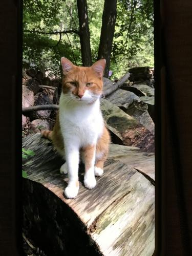 Lost Male Cat last seen South Medina Line Rd., Wadsworth, OH 44281