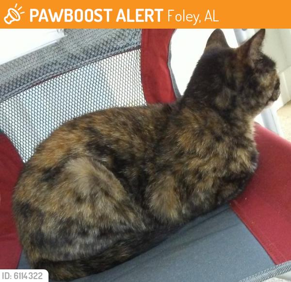 Found/Stray Female Cat last seen foley hospital, Foley, AL 36535